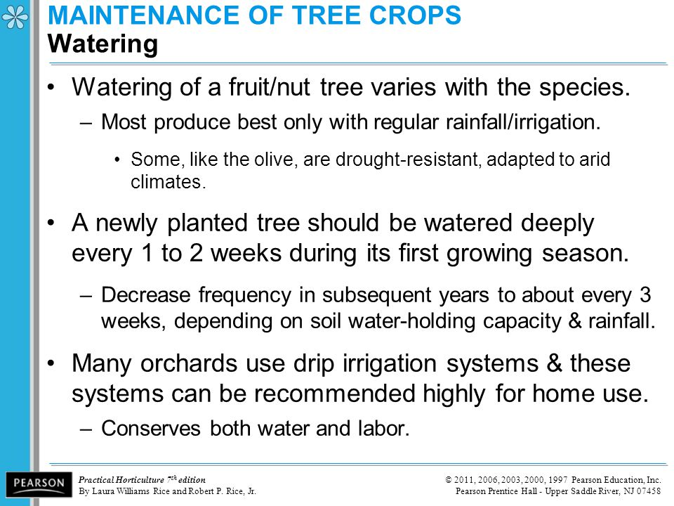 MAINTENANCE OF TREE CROPS Watering