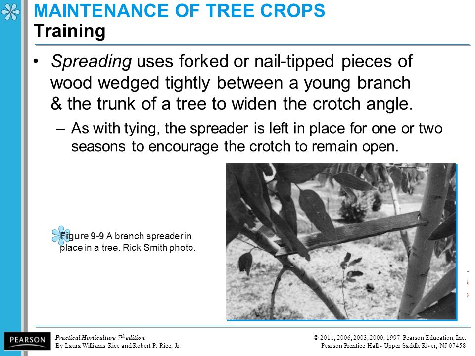 MAINTENANCE OF TREE CROPS Training