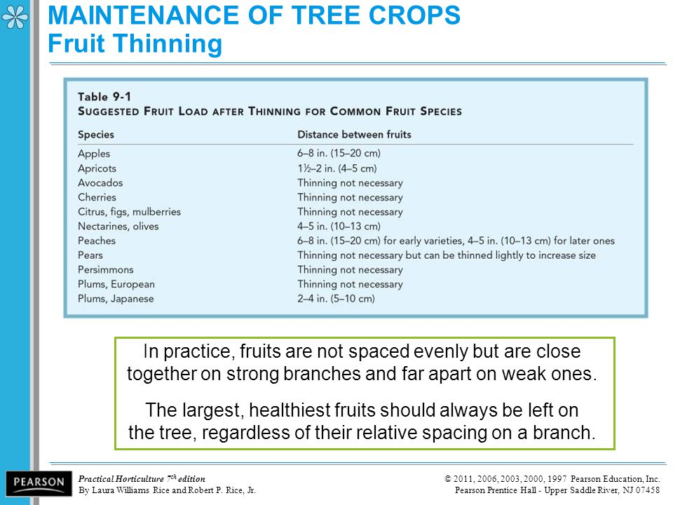 MAINTENANCE OF TREE CROPS Fruit Thinning