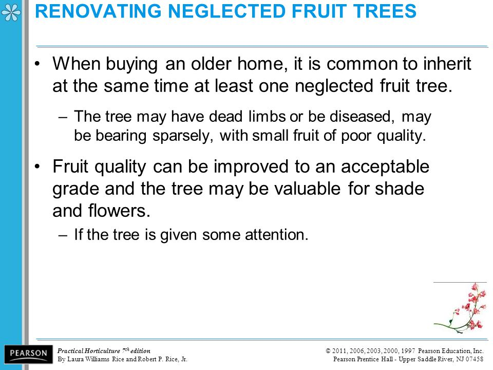 RENOVATING NEGLECTED FRUIT TREES