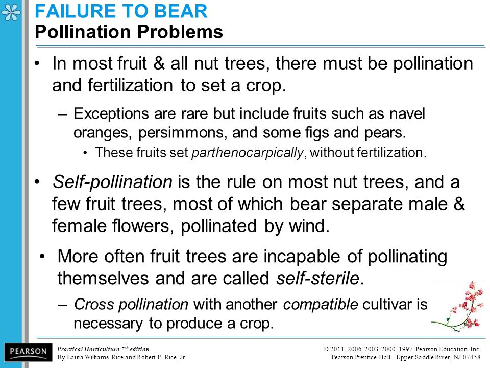 FAILURE TO BEAR Pollination Problems