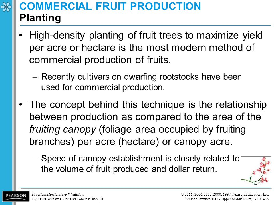 COMMERCIAL FRUIT PRODUCTION Planting