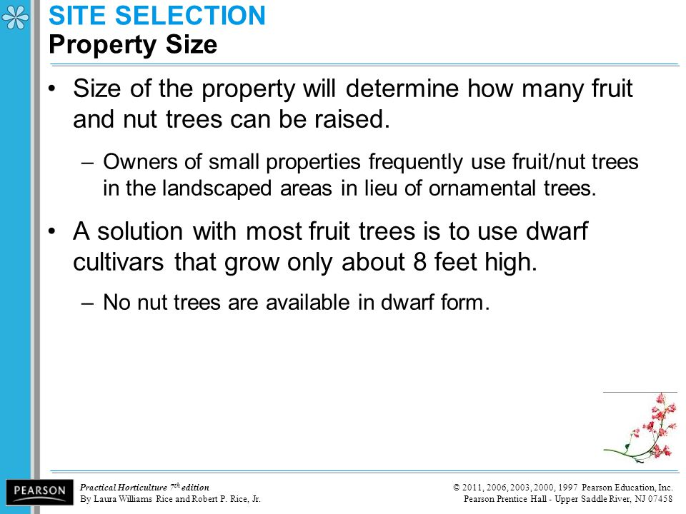 SITE SELECTION Property Size