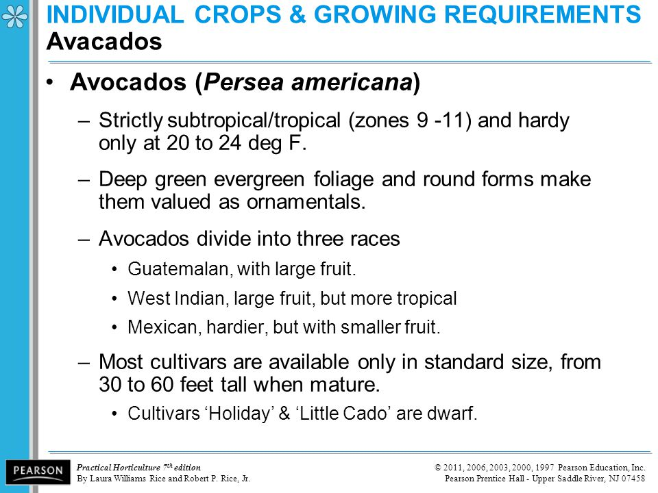 INDIVIDUAL CROPS & GROWING REQUIREMENTS Avacados