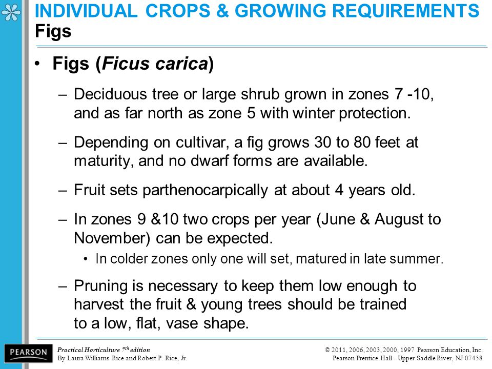 INDIVIDUAL CROPS & GROWING REQUIREMENTS Figs