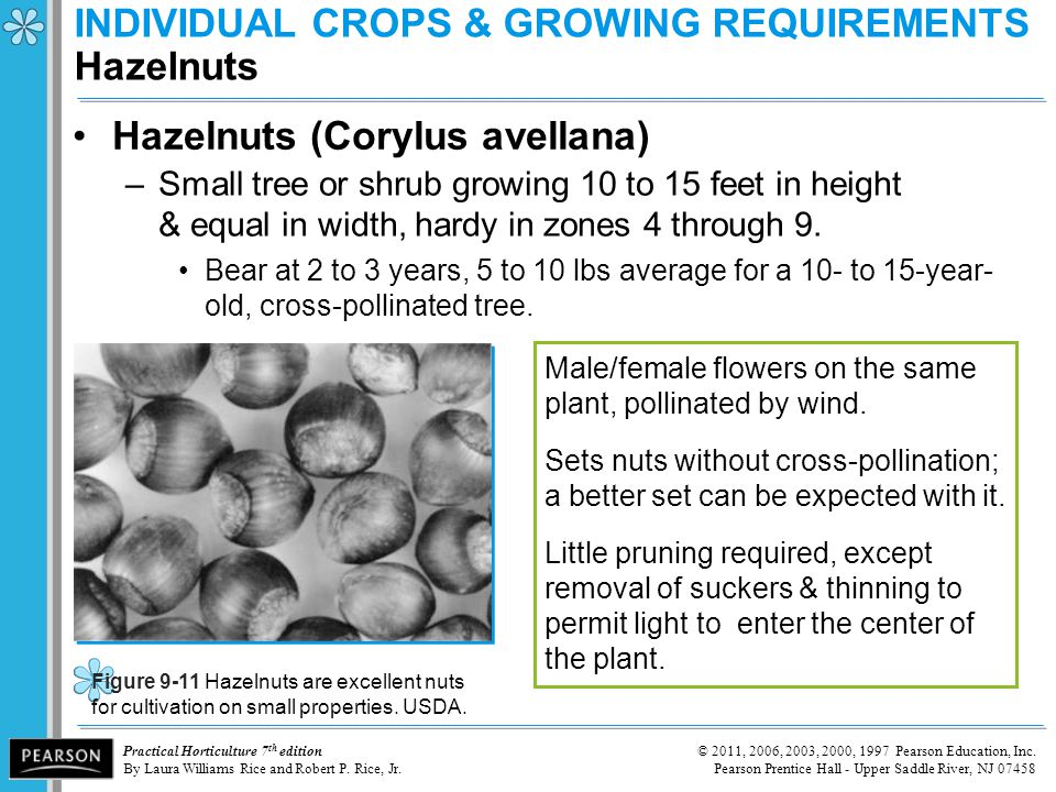INDIVIDUAL CROPS & GROWING REQUIREMENTS Hazelnuts