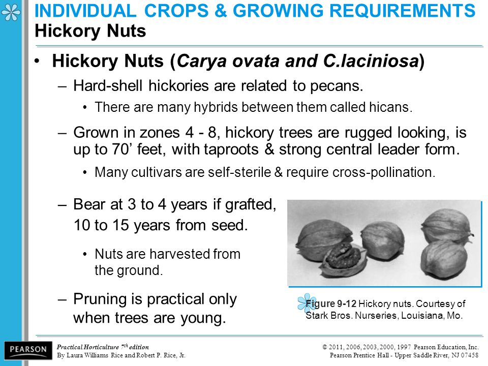 INDIVIDUAL CROPS & GROWING REQUIREMENTS Hickory Nuts