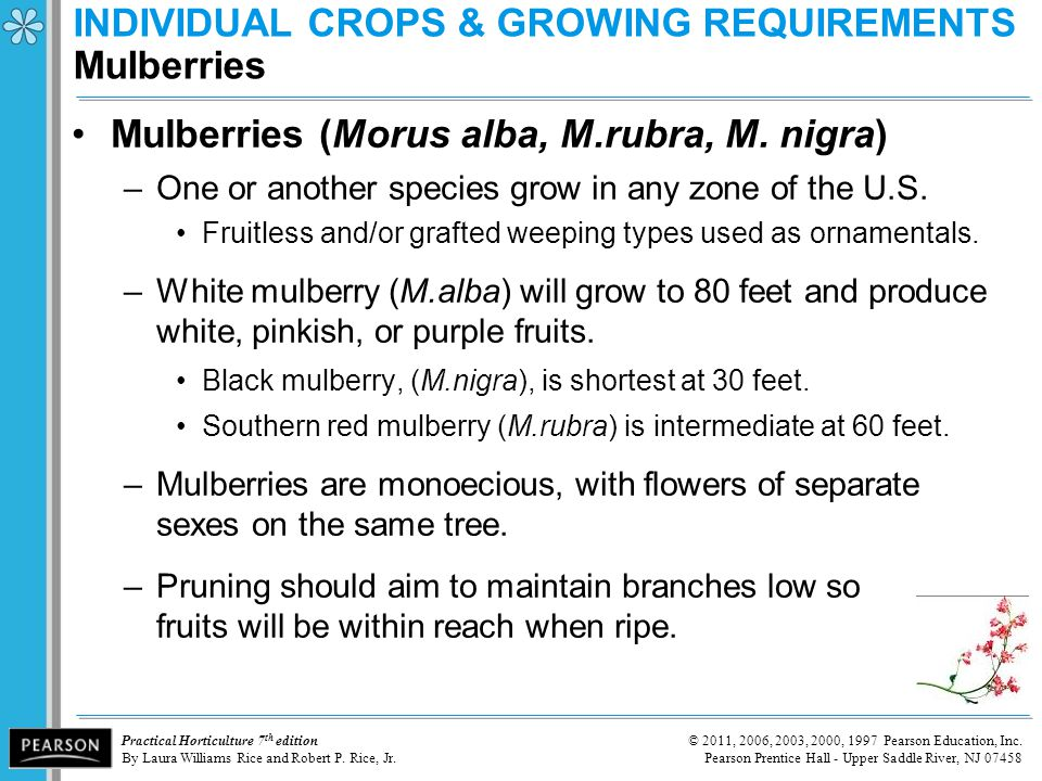 INDIVIDUAL CROPS & GROWING REQUIREMENTS Mulberries
