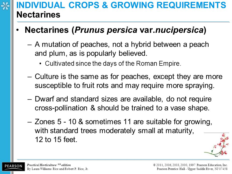 INDIVIDUAL CROPS & GROWING REQUIREMENTS Nectarines