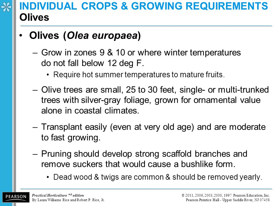 INDIVIDUAL CROPS & GROWING REQUIREMENTS Olives