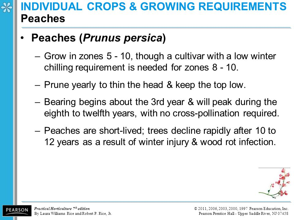 INDIVIDUAL CROPS & GROWING REQUIREMENTS Peaches