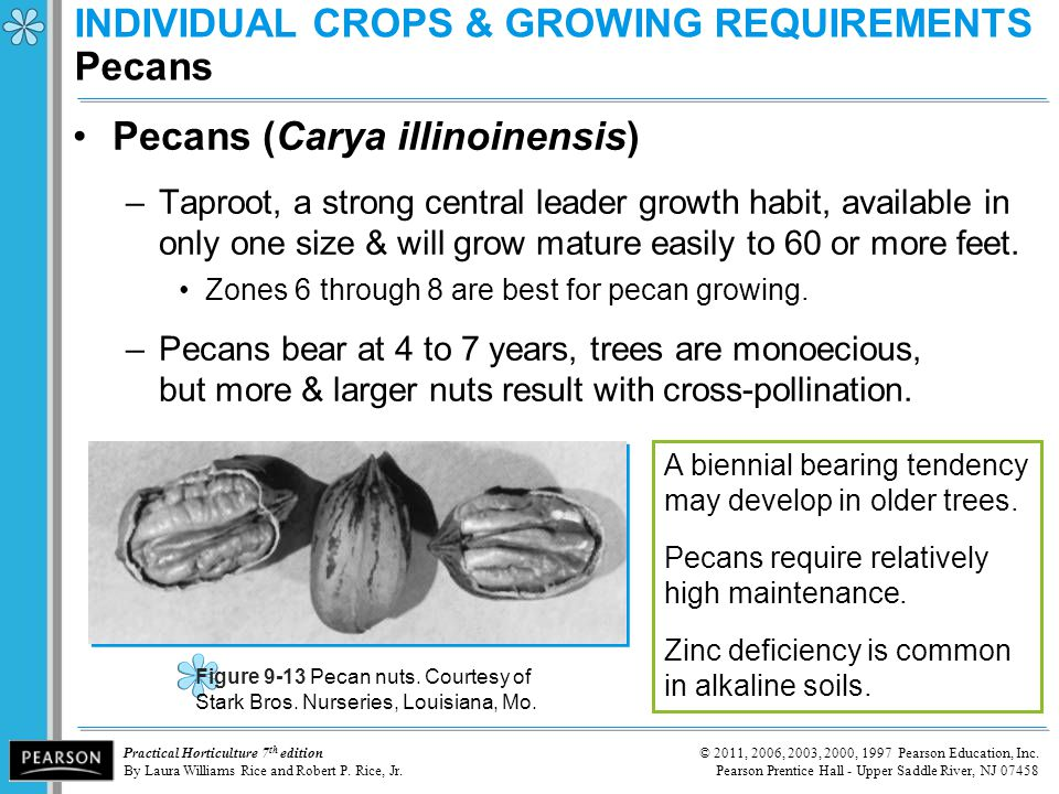 INDIVIDUAL CROPS & GROWING REQUIREMENTS Pecans