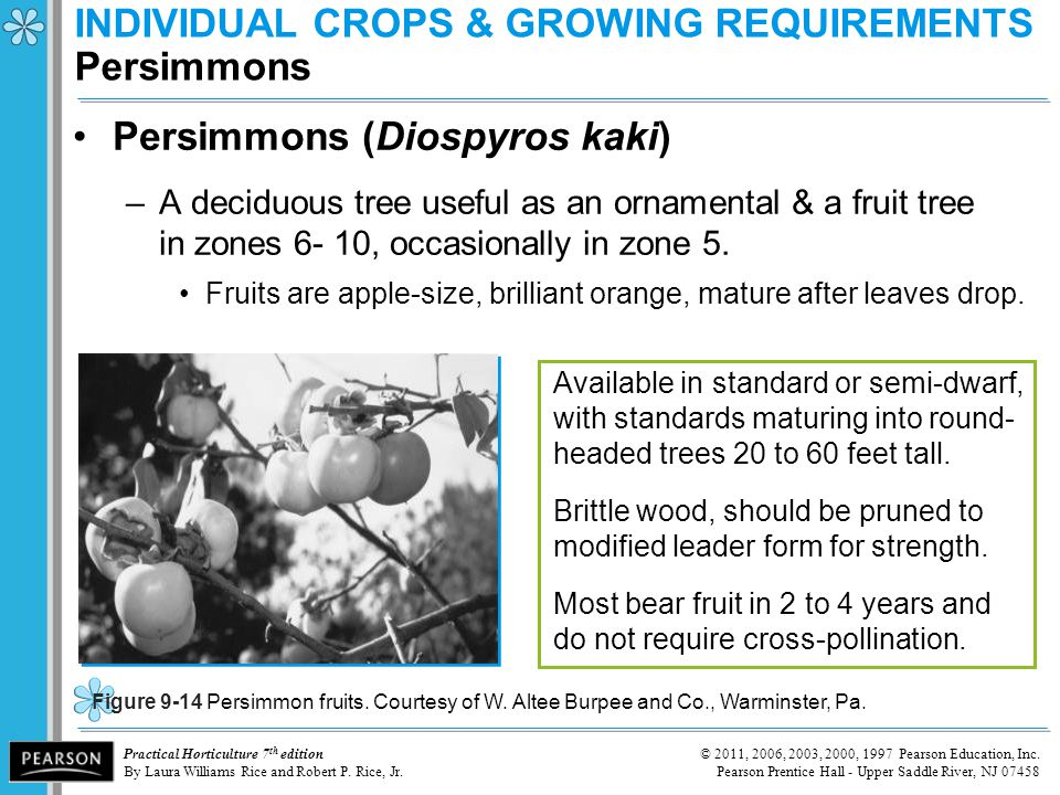 INDIVIDUAL CROPS & GROWING REQUIREMENTS Persimmons