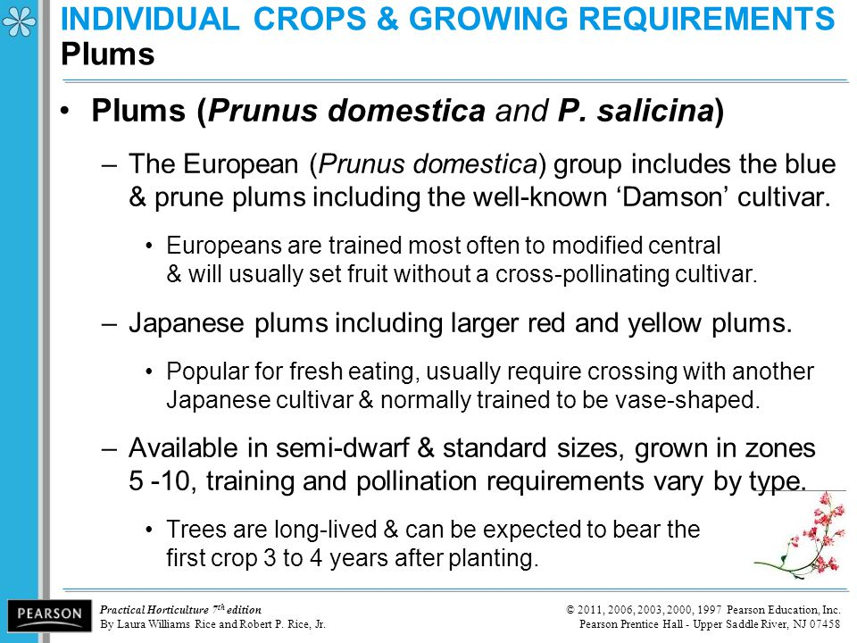 INDIVIDUAL CROPS & GROWING REQUIREMENTS Plums