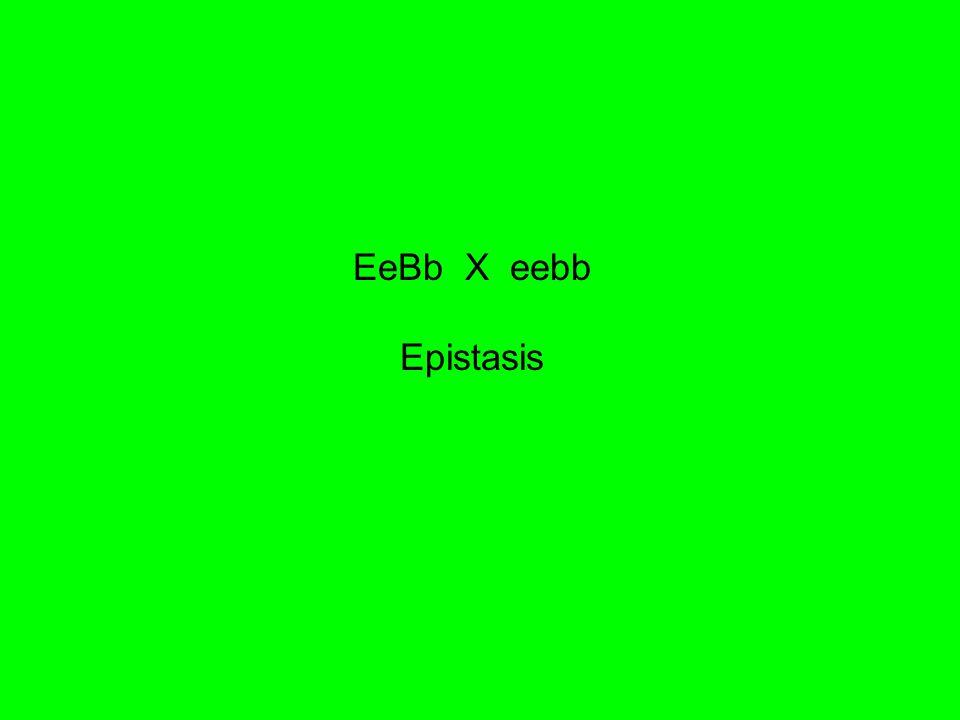 EeBb X eebb Epistasis