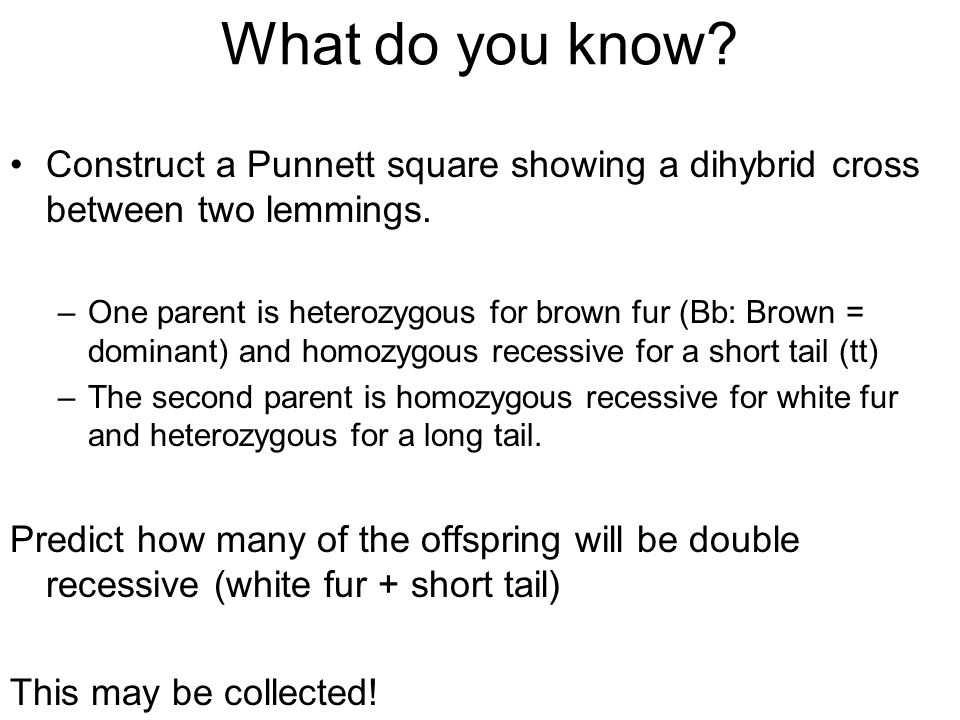 What do you know Construct a Punnett square showing a dihybrid cross between two lemmings.