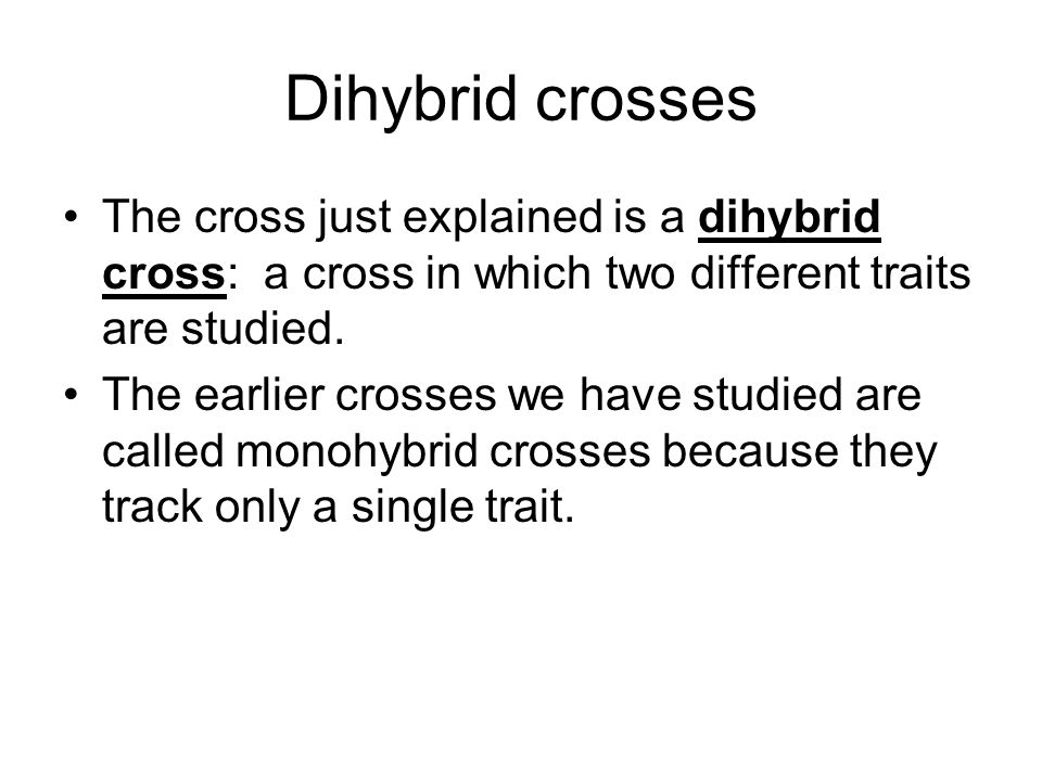 Dihybrid crosses The cross just explained is a dihybrid cross: a cross in which two different traits are studied.