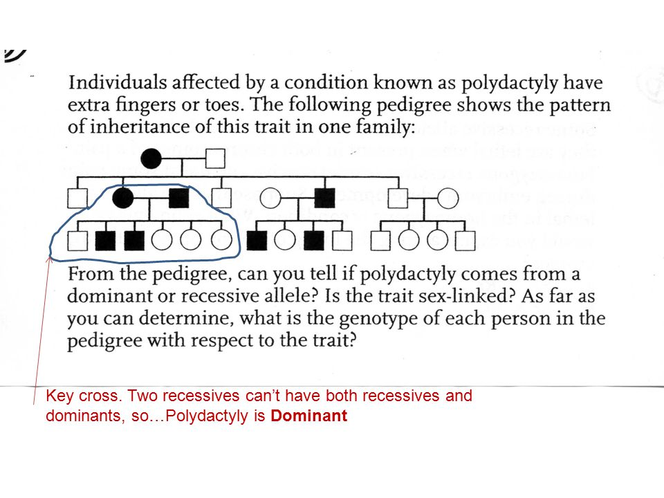 Key cross. Two recessives can't have both recessives and dominants, so…Polydactyly is Dominant