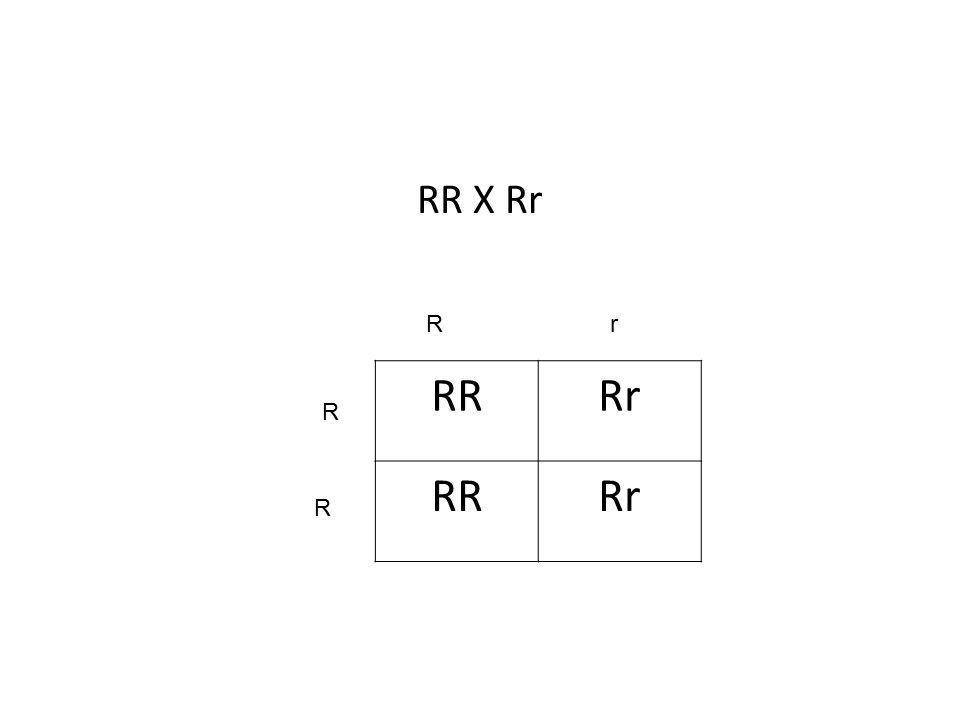RR X Rr R r RR Rr R R