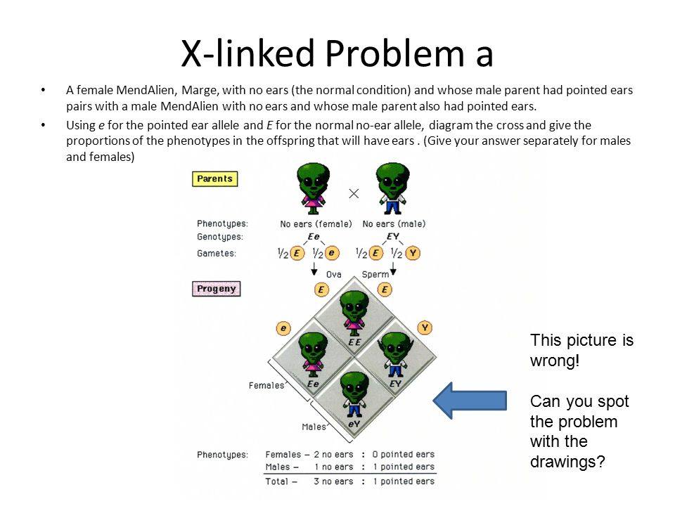 X-linked Problem a This picture is wrong!