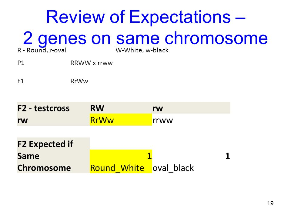 Review of Expectations – 2 genes on same chromosome