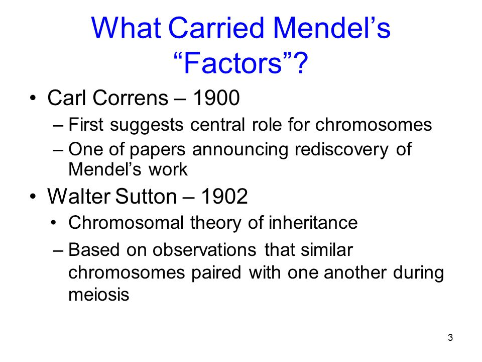 What Carried Mendel's Factors
