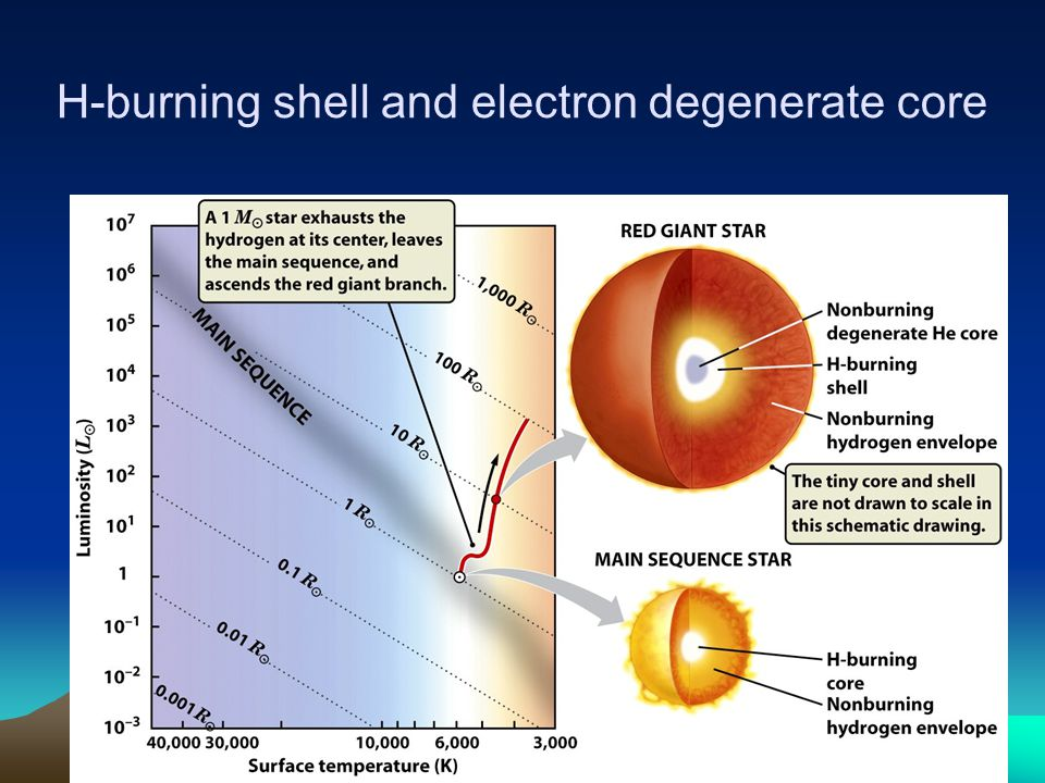 H-burning shell and electron degenerate core