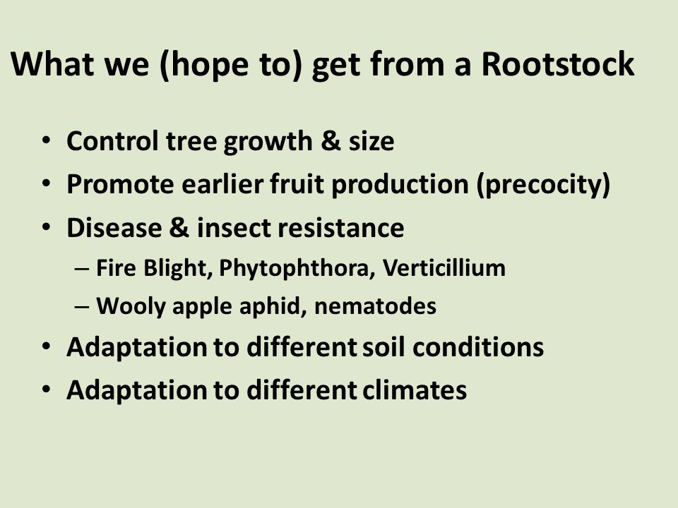 What we (hope to) get from a Rootstock