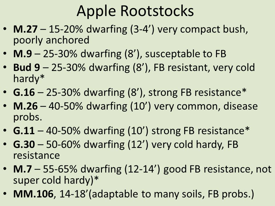 Apple Rootstocks M.27 – 15-20% dwarfing (3-4') very compact bush, poorly anchored. M.9 – 25-30% dwarfing (8'), susceptable to FB.