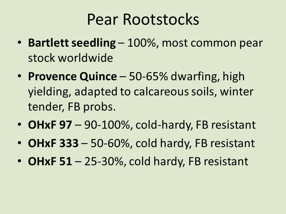 Pear Rootstocks Bartlett seedling – 100%, most common pear stock worldwide.