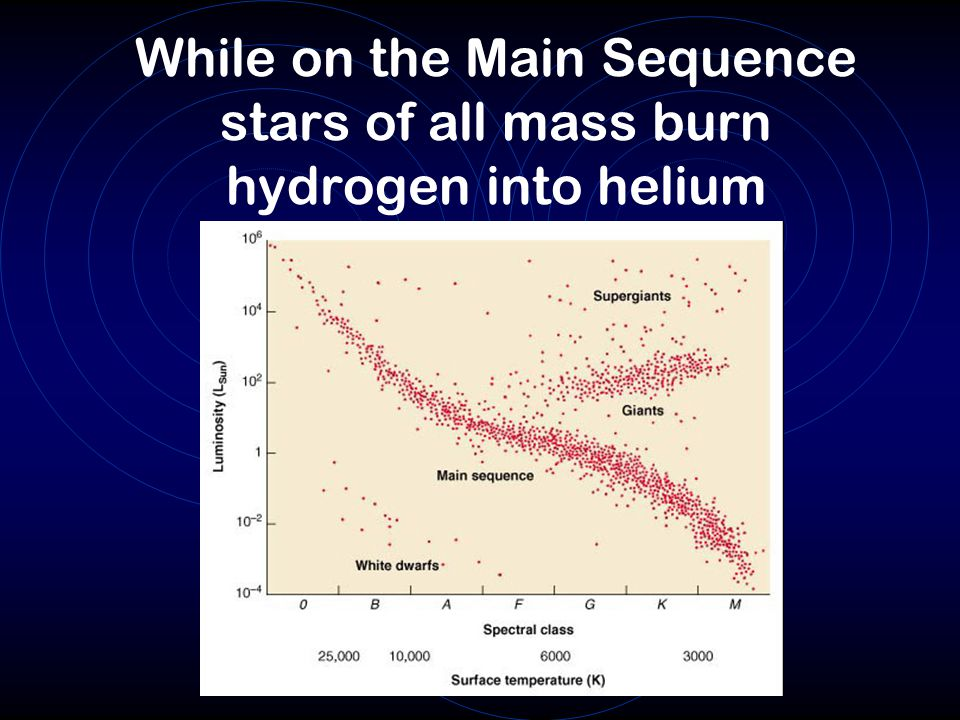 While on the Main Sequence stars of all mass burn hydrogen into helium