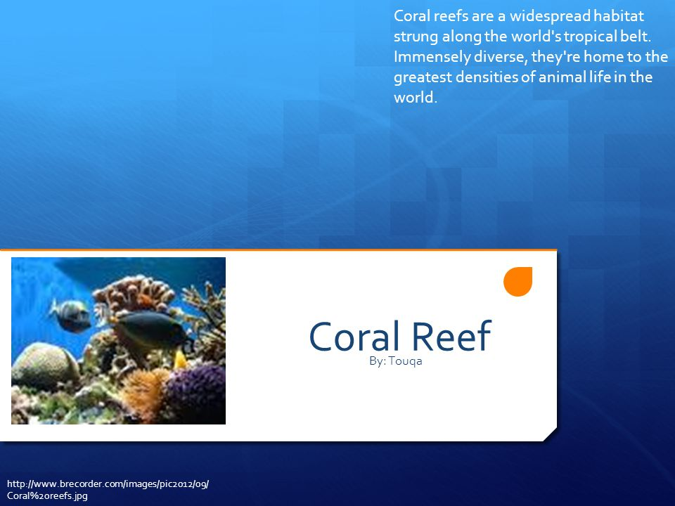 Coral reefs are a widespread habitat strung along the world s tropical belt. Immensely diverse, they re home to the greatest densities of animal life in the world.