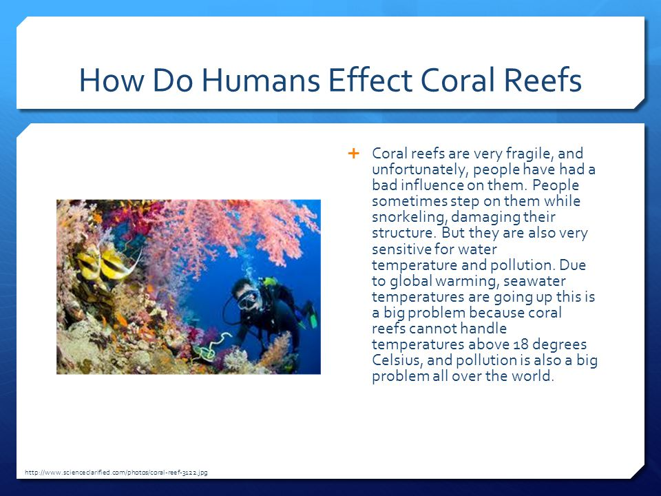 How Do Humans Effect Coral Reefs