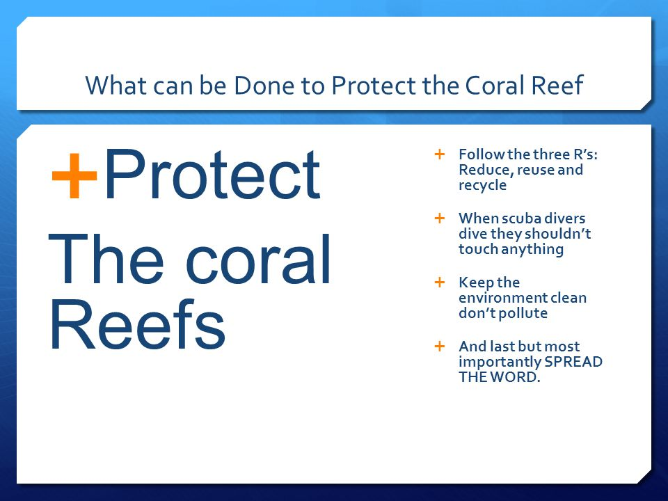 What can be Done to Protect the Coral Reef