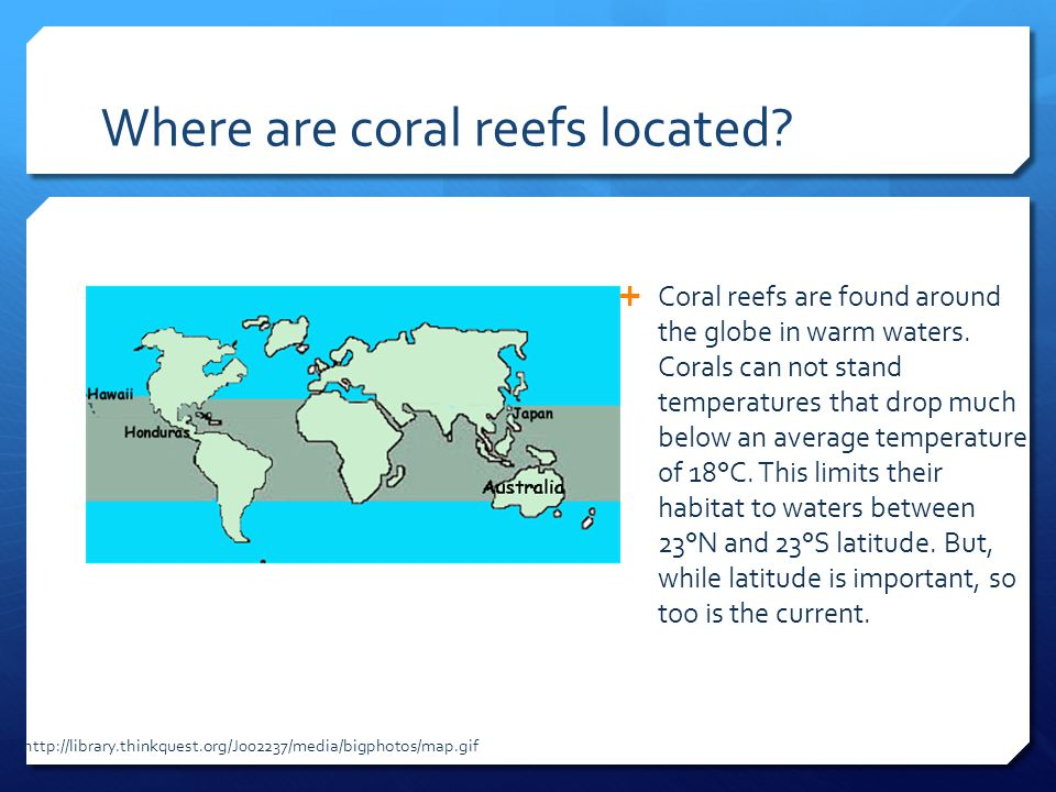 Where are coral reefs located