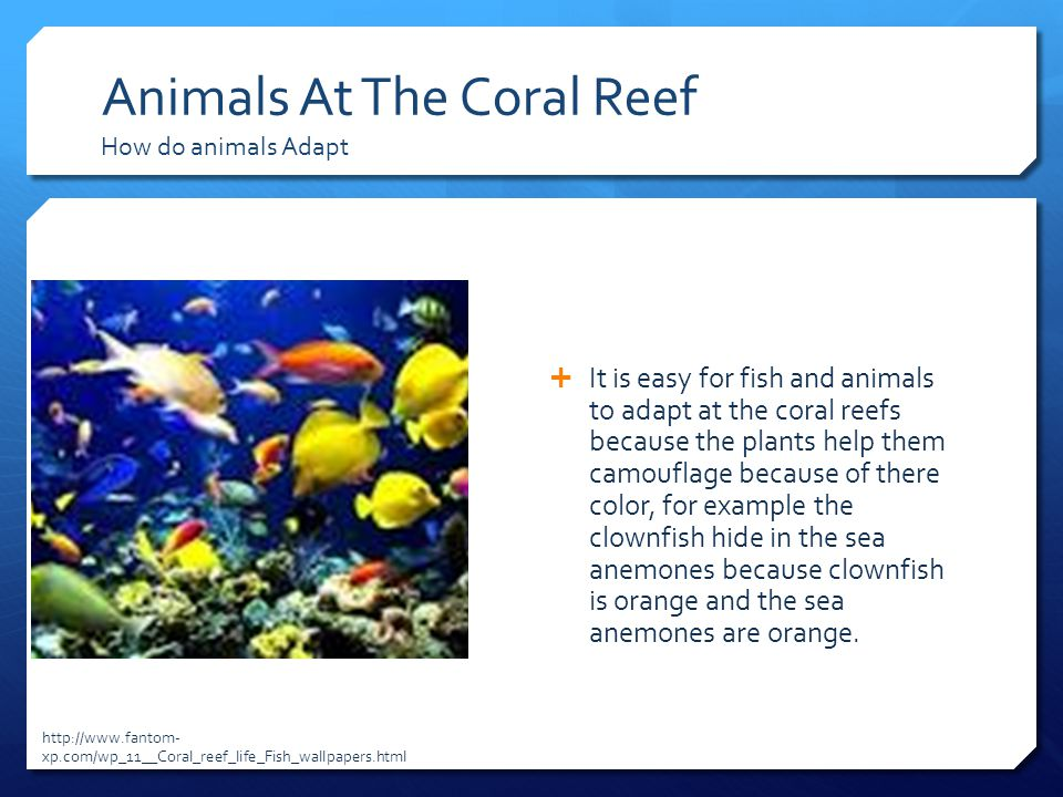 Animals At The Coral Reef How do animals Adapt