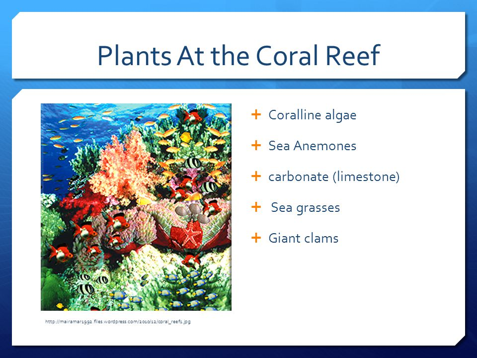 Plants At the Coral Reef