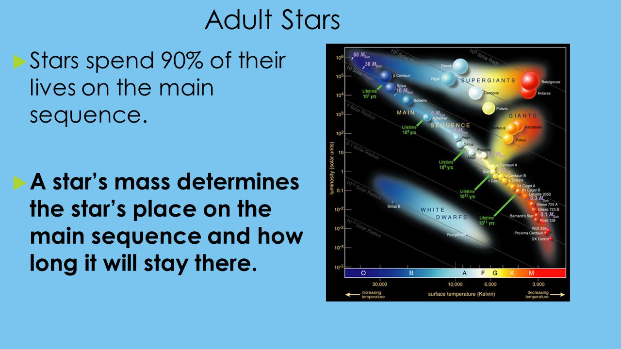 Adult Stars Stars spend 90% of their lives on the main sequence.