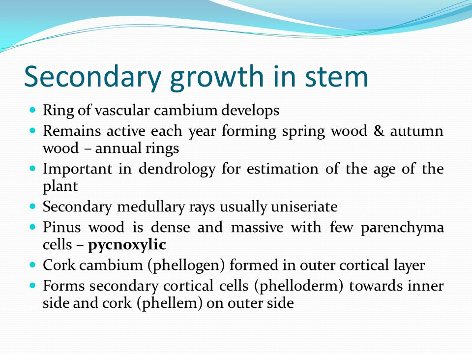Secondary growth in stem