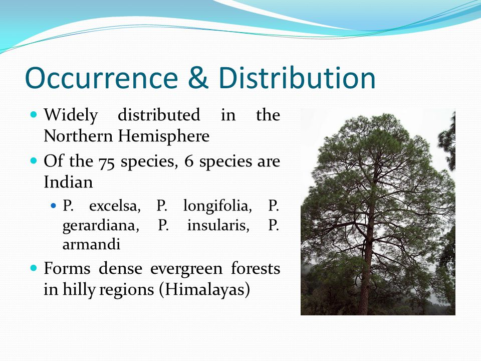 Occurrence & Distribution