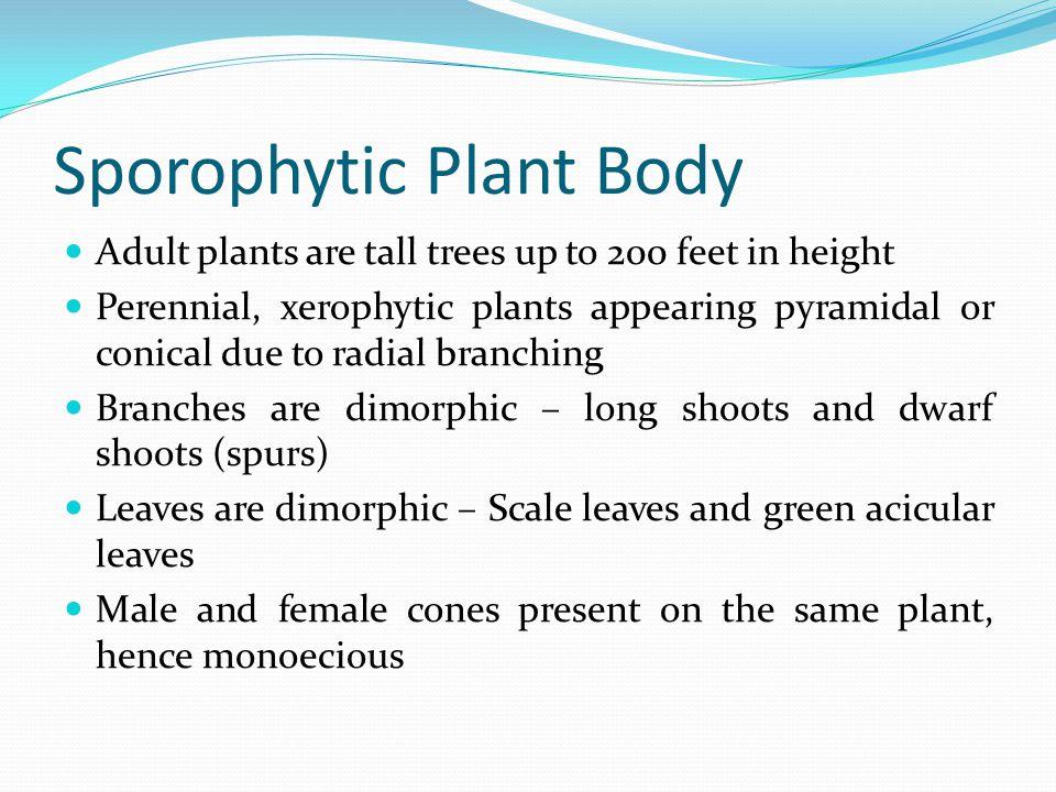 Sporophytic Plant Body