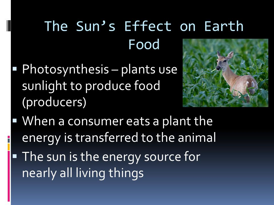 The Sun's Effect on Earth Food