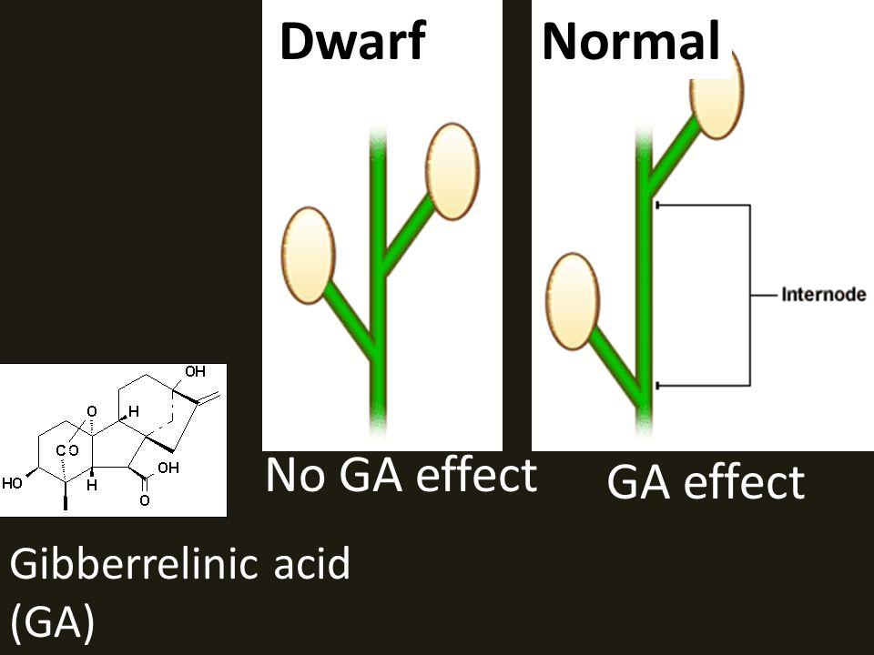 Dwarf Normal No GA effect GA effect Gibberrelinic acid (GA)