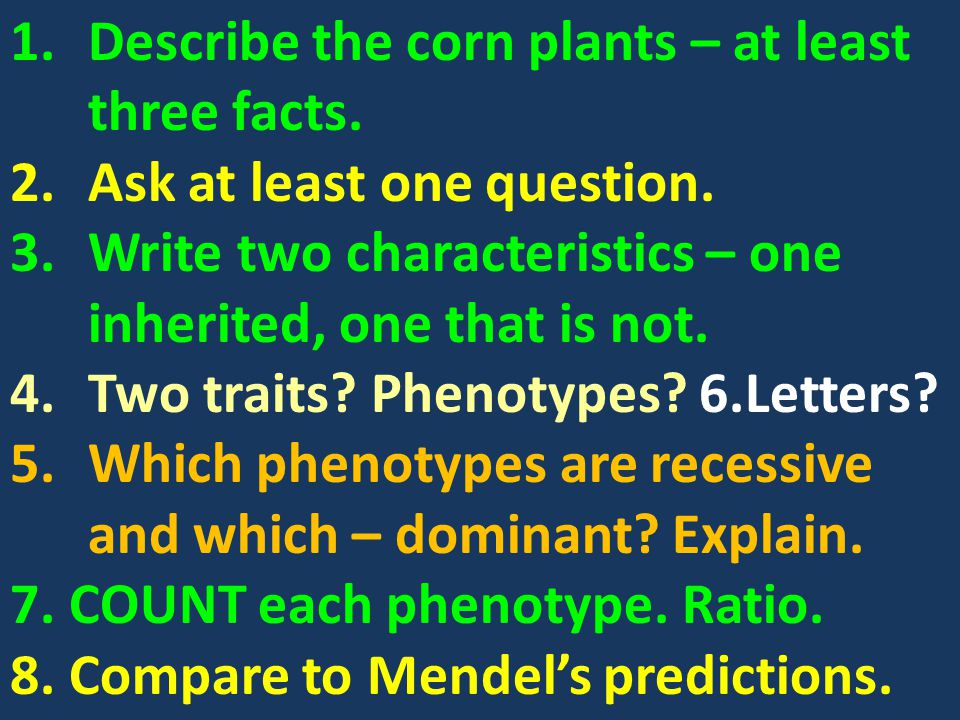Describe the corn plants – at least three facts.