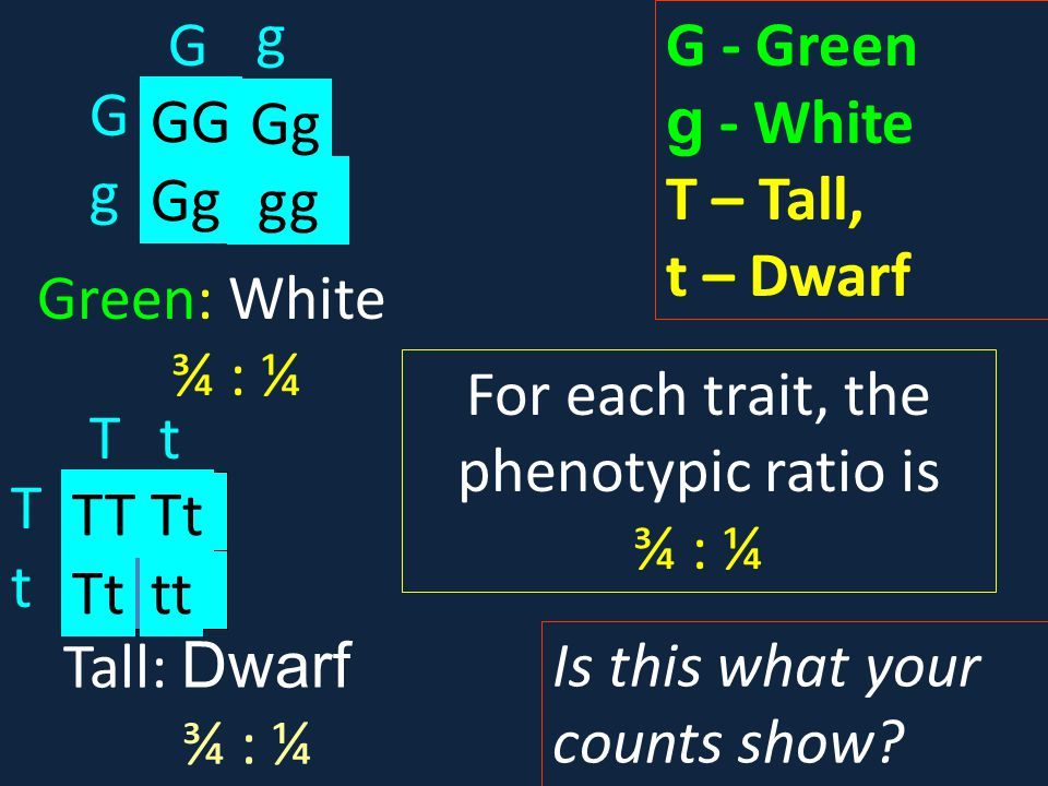 For each trait, the phenotypic ratio is