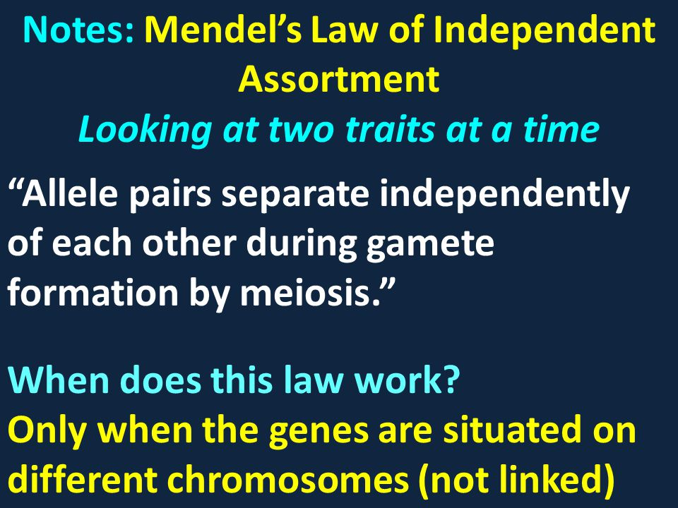 Notes: Mendel's Law of Independent Assortment