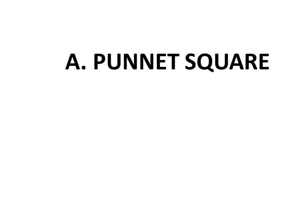 A. PUNNET SQUARE