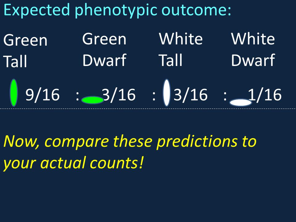 Expected phenotypic outcome: