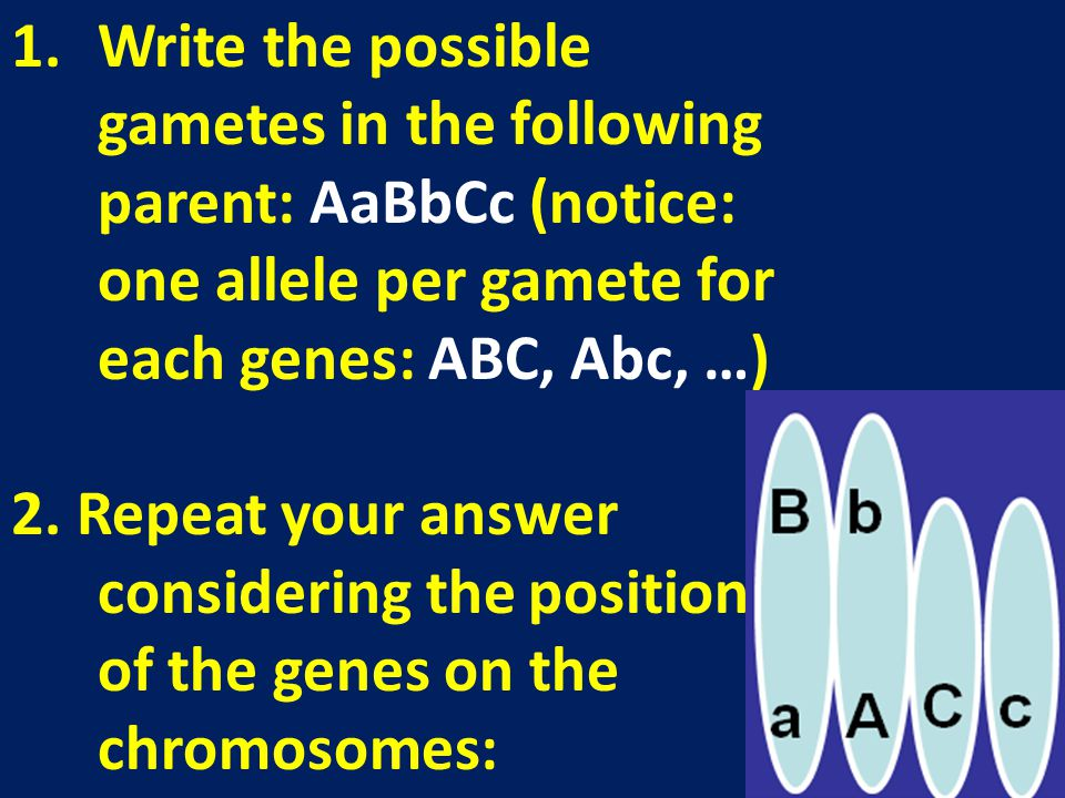 Write the possible gametes in the following parent: AaBbCc (notice: one allele per gamete for each genes: ABC, Abc, …)