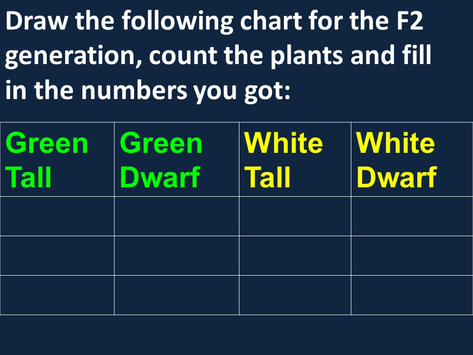 Draw the following chart for the F2 generation, count the plants and fill in the numbers you got:
